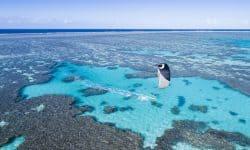 Kitesurfen bij het Great Barrier Reef