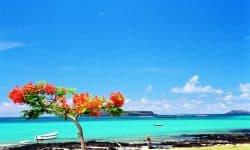 Bucketlist Mauritius – de perfecte kitesurfbestemming